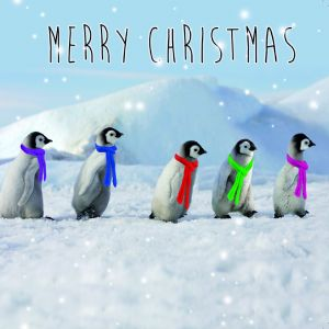 Walking In The Winter Wonderland Cards Christmas Cards Shop